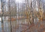 A Woodland Flood