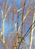 January Trees