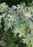 71 lichens and fern