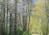 Two short Spring walks