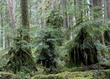 Rain Forests of Washington State