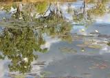 5 waterlily billabong