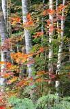 A Fall Woodland Walk