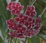 Succulent Flowers 4-15.jpg
