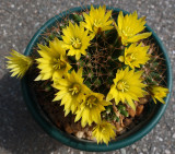 Unknown Cactus 5-21-15.jpg