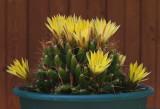 Unknown Cactus b 5-21-15.jpg
