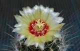 Unknown Cactus 6-10-15.jpg