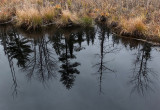 Reflection   City Forest 11-19-15-pf.jpg