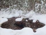 Kelley -  DeMeritt Forest 1-3-16-pf.jpg