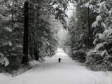 Logan Rd. DeMeritt Forest c 2-5-16-pf.jpg