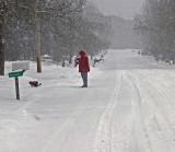 Dog Walker Neighborhood  1-16-16-pf.jpg