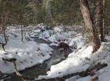 Kelley - Goose Ridge Trail 1-26-16-pf.jpg