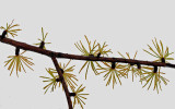 Branch - Walden 11-4-14-pf.jpg