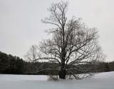 Tree Side Trail  Newport- Dover- Foxcroft 1-18-16-pf.jpg