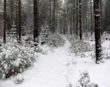 Yellow Trail DeMeritt Forest  2-5-16-pf.jpg