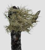 Lichen  Branch Lake b 2-21-16-pf.jpg