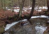 Kelley - Brookside Trail Branch Pond 2-21-16-pf.jpg
