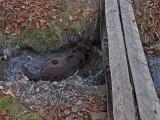 Kelley -  Perch-Pond Trails  12-1-15-pf.jpg