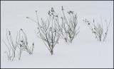 Weeds b 1-18-10-pf.jpg