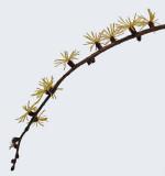 Branch - Walden b 11-4-14-pf.jpg