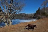 Kelley - Little Long Pond 3-5-16-pf.jpg