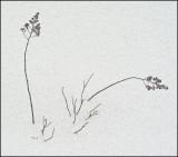 Weeds 1-18-10-pf.jpg