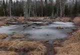 Small Pond  Perch Pond Trail -3-10-16-pf.jpg