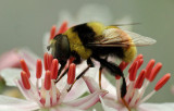 Bee - Bangor 8-12-12-ed-pf .jpg