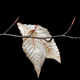 Leaves Little Long Pond b 3-16-16-pf.jpg