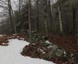 Stone Wall Hills to Sea Trail 3-26-16-pf.jpg
