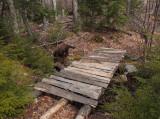 Kelley -  Partridge Pond Trail b 3-14-16-pf.jpg