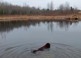 Kelley - Beaver Pond City Forest b 4-2-16-pf.jpg