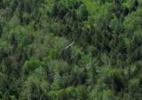 Turkey Vulture Fletcher Bluff  5-21-10-pf.jpg