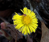 Wildflowers  City Forest b 4-16-16.jpg