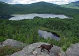 Big Moose Pond from Loop Trail Overlook 7-31-10-ed-pf.jpg