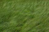 Grass Little Long Pond 6-20-16-pf.jpg