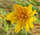 Wildflower  Walden 11-2-12-ed-pf.jpg