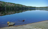 Partridge Pond b 10-26-12-pf.jpg