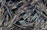 Reeds - Bubble Pond 12-16-12-pf.jpg