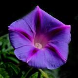 Morning Glory Garden 7-24-16.jpg