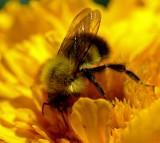 Bee  Garden 7-24-16.jpg