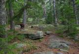 Norumbega Mtn. Trail 5-26-10-ed-pf.jpg