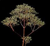 Plant Essex Woods v2 7-29-16-pf.jpg
