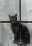 Cat in Window  - Bangor 11-4-12-ed-pf.jpg