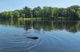 Kelley -   Stillwater River c 8-2-16-pf.jpg