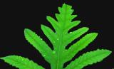 Leaf Perch Pond 6-24-16-pf.jpg