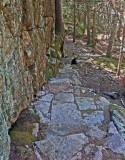 Steps- New Trail Harbor Brook b  8-7-16-pf.jpg