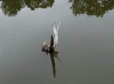 Stump -  Black Pond  7-1-13-ed-pf.jpg