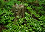 Stump Newman Hill-Hinds 6-14-16-pf.jpg