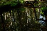 Reflection   Blue Hill Trails 7-23-12-o-pf.jpg